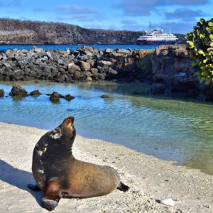 Sea Lion at Darwin Bay on Genovesa Island in Galápagos, Ecuador - Encircle Photos