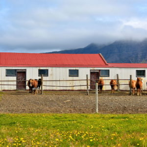 Accommodation Options on Snæfellsnes Peninsula, Iceland - Encircle Photos