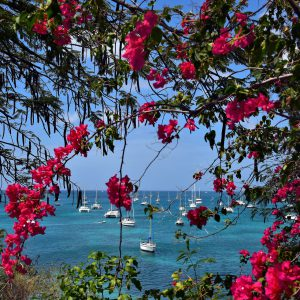 Royal Poinciana on Island of Flowers at Le Marin, Martinique - Encircle Photos