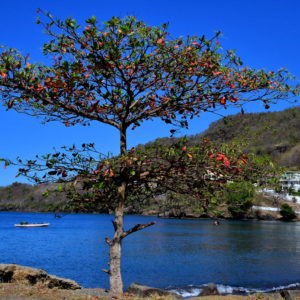Waterfront of Layou Bay in Layou, Saint Vincent - Encircle Photos