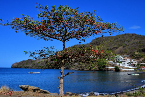 Waterfront of Layou Bay in Layou, Saint Vincent - Encircle Photos