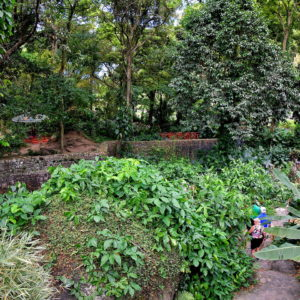 Garden at Wallilabou Heritage Park in Wallilabou, Saint Vincent - Encircle Photos