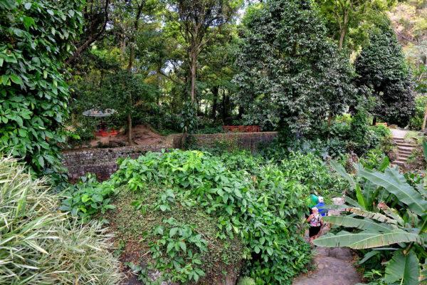 Garden at Wallilabou Heritage Park in Wallilabou, Saint Vincent - Encircle Photos